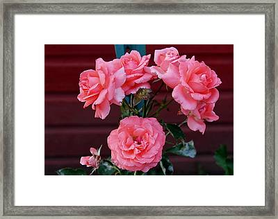 My Rose Garden Framed Print by Victoria Sheldon