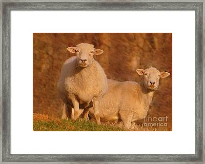 Framed Print featuring the photograph My Sheep ...   by Lydia Holly
