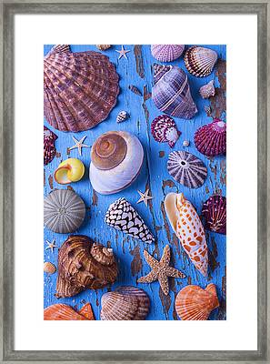 My Shell Collection Framed Print by Garry Gay