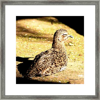 My Spot In The Sun Framed Print by Dick Botkin