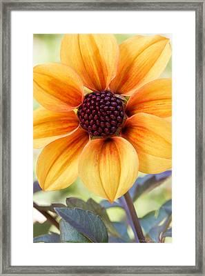 My Sunshine Framed Print by Heidi Smith