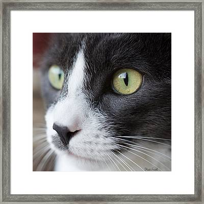 Framed Print featuring the photograph My Sweet Boy by Heidi Smith