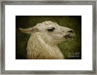 My Sweetheart Framed Print by Angela Doelling AD DESIGN Photo and PhotoArt