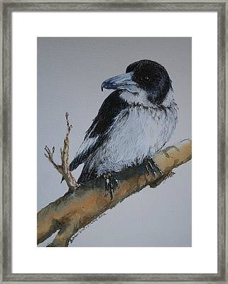 My Territory - Butcherbird Framed Print by Jan Lowe