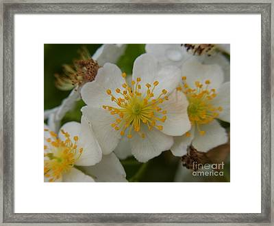 Framed Print featuring the photograph My Time Is Now by Agnieszka Ledwon