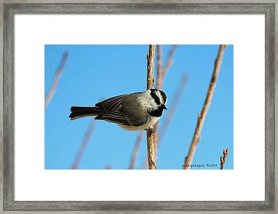 My Turn At The Feeder Framed Print