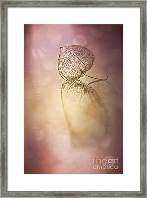 My Turn In The Spotlight Framed Print
