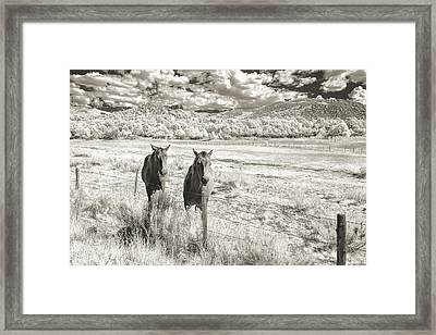 My Two Friends Framed Print by Jon Glaser