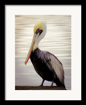 Waterway Birds Framed Prints