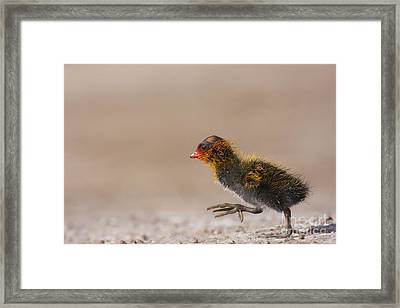 My What Big Feet You Have Framed Print by Ruth Jolly