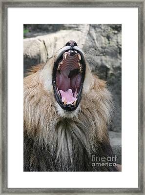My What Big Teeth You Have Framed Print