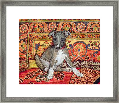 My Whippet Baby Framed Print by Ditz