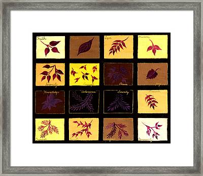 My Wishes For You Framed Print by Barbara Griffin
