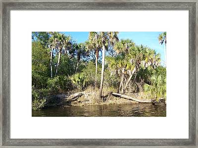 Framed Print featuring the photograph Myakka River by John Mathews