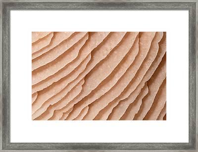 Mycena Fungus Gills Abstract Framed Print by Nigel Downer