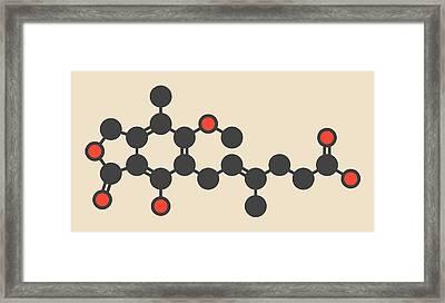 Mycophenolate Or Mycophenolic Acid Drug Framed Print by Molekuul