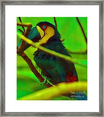 Mynah Bird Framed Print by Craig Wood