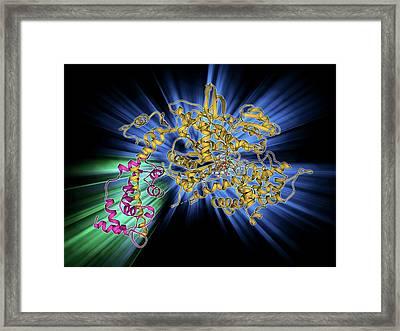 Myosin Molecule Framed Print
