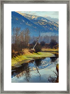 Myrtle Creek Reflections Framed Print by Annie Pflueger