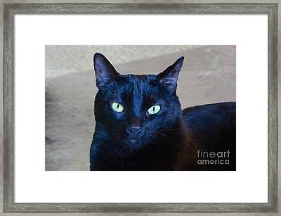 Mysterious Black Cat Framed Print by Luther Fine Art