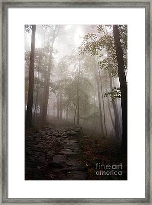 Mysterious Forest 5 Framed Print