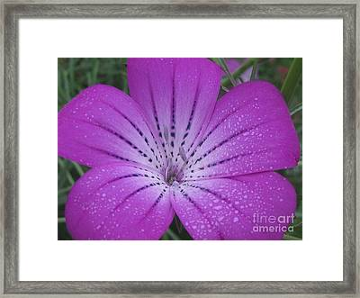 Mysterious Photography Framed Print by Tina Marie