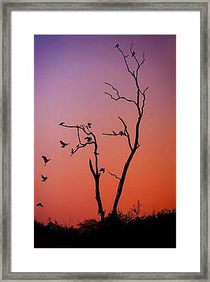 Mysterious Sunset With Solo Of The Tree And Choir Of Birds  Framed Print