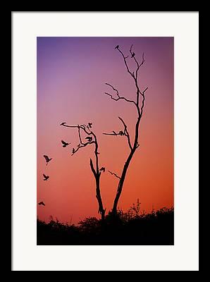 Sceleton Framed Prints