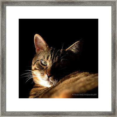 Mysterious Tabby Cat Framed Print by Renee Forth-Fukumoto