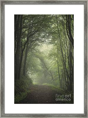 Mystery Awakens Framed Print