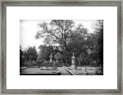 Mystery In Magnolia Framed Print by John Rizzuto