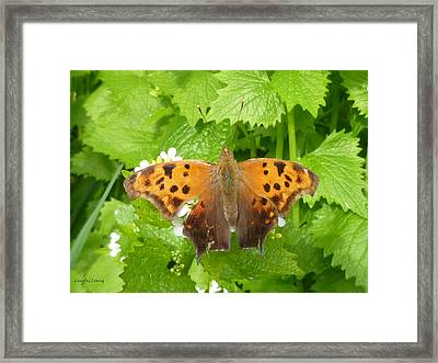 Framed Print featuring the photograph Mystery Lady by Lingfai Leung