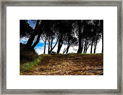 Mystery Of The Forest Framed Print