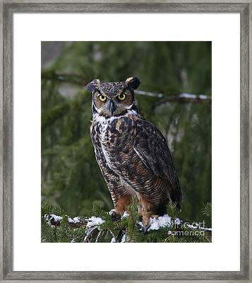Mystery Of The Forest Framed Print by Inspired Nature Photography Fine Art Photography