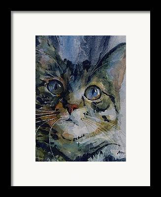 Tabby Framed Prints