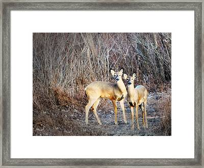 Mystic Duo Framed Print by Marty Koch