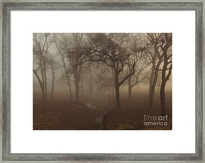 Mystic Forest 004 Framed Print