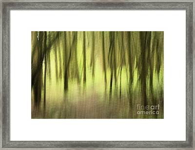 Mystic Forest Framed Print by Inspired Nature Photography Fine Art Photography