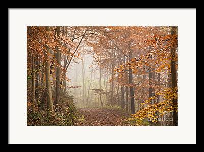 Selective Soft Focus Framed Prints