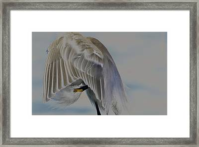 Mystical Egret Framed Print