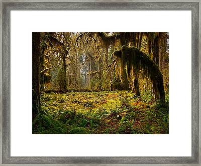 Mystical Forest Framed Print by Leland D Howard
