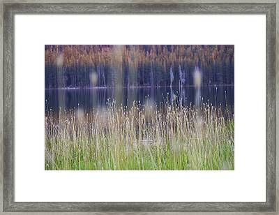 Mystical Meadow Framed Print by Will Akers