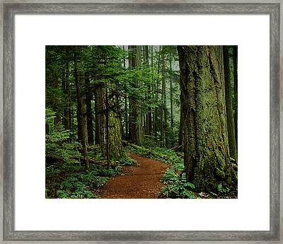 Mystical Path Framed Print