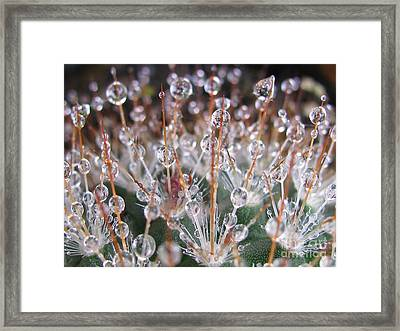 Mystical Photography Framed Print by Tina Marie