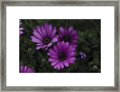Mystical Purple Framed Print by Penny Lisowski