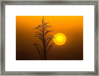 Mystical Sunset Framed Print by Shelby  Young