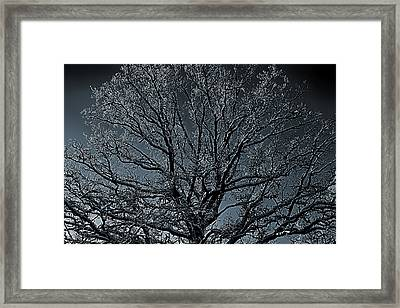 Mystical Tree Framed Print by Christian Lagereek
