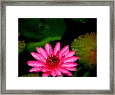 Mystical Water Lilly Framed Print
