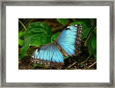 Mystical Wings Framed Print by Fraida Gutovich