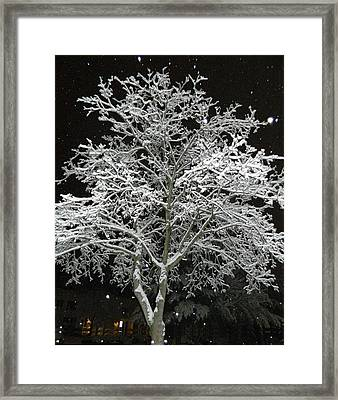 Mystical Winter Beauty Framed Print